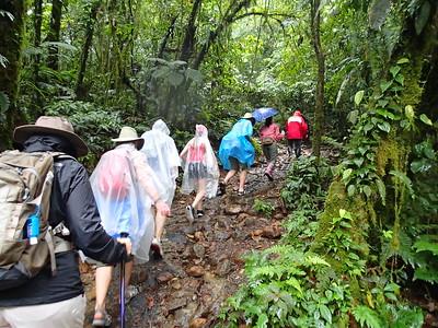 Arenal Volcano & Rainforest Walk 8